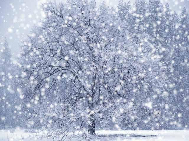 Блог-2 (фото из Интернета) Dx-winter-snow-screensaver
