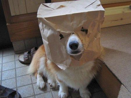 Cessez de vous fabriquer un gourou, s'il vous plaît ... Tumblr_static_dog-logo