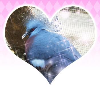 Jurassic Heart (A dinosaur dating sim, you all should play this) Hatoful_Boyfriend_Intermission_2_5524