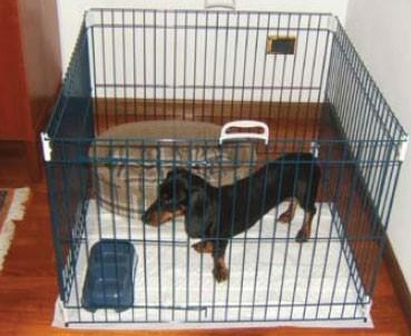 Le parc/enclos à chiot - Page 2 La_parc-pour-animaux-dog-training-955