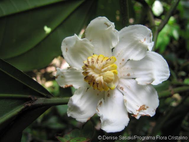 une fleur de Martin 24 septembre trouvé par Ajonc Large3889