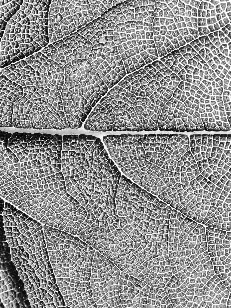 qu'est ce Martin du 6 décembre trouvé par Ajonc Depositphotos_5913569-Leaf-texture-macro.