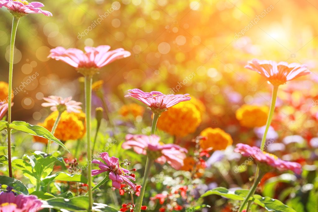 Mardi 18 avril  Depositphotos_11376473-stock-photo-abstract-flowerbed-in-sunny-day