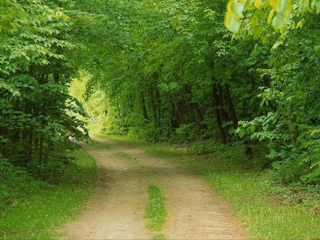 عکس -آرامش بخش از طبیعت Jungle