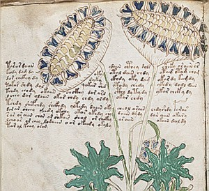 ★World's Most Mysterious Book Finally Decoded★★★The Voynich Manuscript ★★ Flowers-300x274