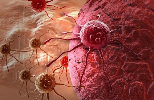 Одуванчик признан в 100 раз более эффективным, чем химиотерапия Rak