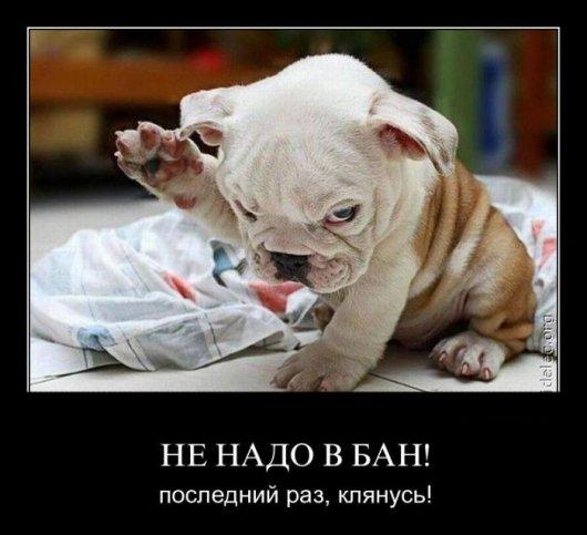 подборка от стасевича - Страница 2 Stimka.ru_1315889593_demotivv