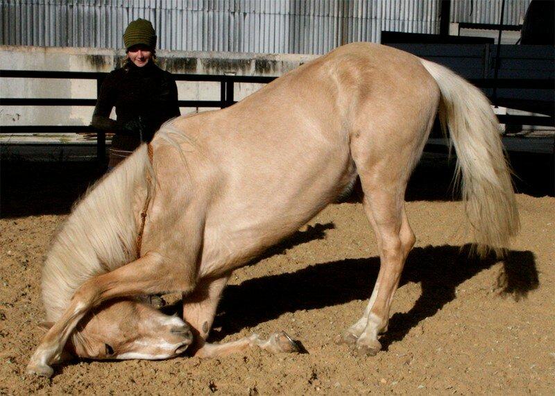 les chevaux.. - Page 14 23146393