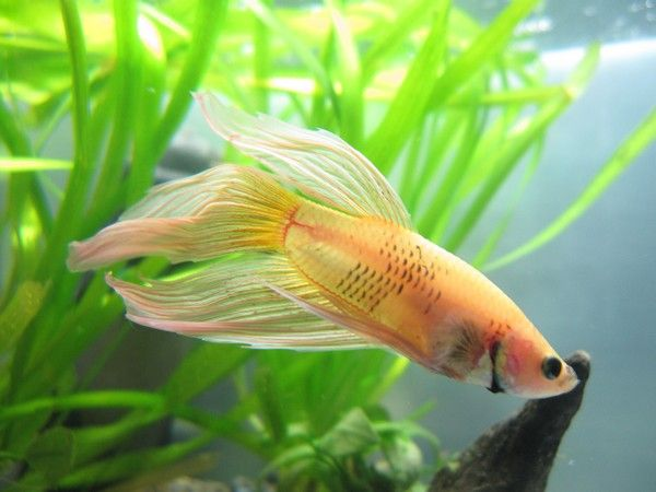 Ma Repro de Betta [En Photos!] 39352844