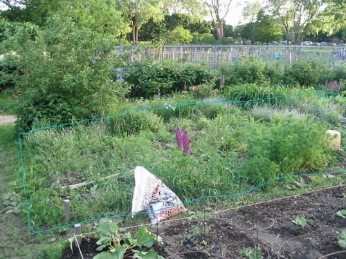 Aménagement de mon jardin ( Édité avec photos!) 14698506_m