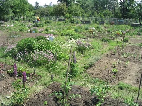 Aménagement de mon jardin ( Édité avec photos!) 14698543_m
