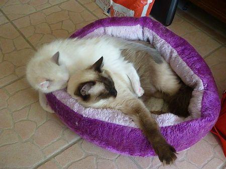 Les 4 chatons de Sausalito's Aconcagua - Page 11 67610278_p