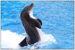 [WDW + Tourisme] Du 25 septembre au 11 octobre 2009 + WDW 2011 page 6 - Page 2 49606750_p