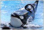 [WDW + Tourisme] Du 25 septembre au 11 octobre 2009 + WDW 2011 page 6 - Page 2 49606938_p