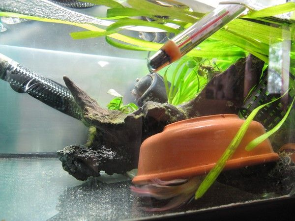 Ma Repro de Betta [En Photos!] 39717839
