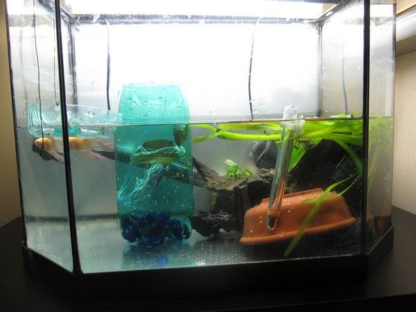 Ma Repro de Betta [En Photos!] 39717363
