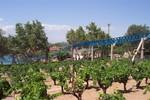 [Espagne] PortAventura (1995) 15650520_p