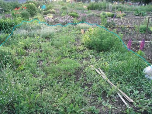 Aménagement de mon jardin ( Édité avec photos!) 14698505_m