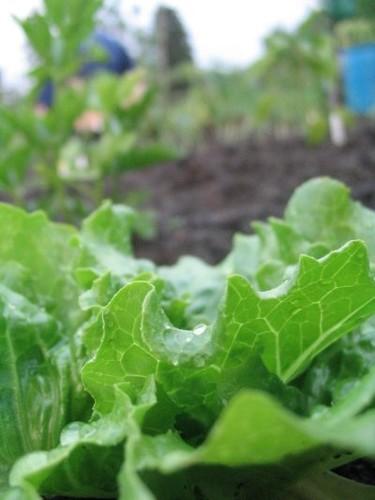 Aménagement de mon jardin ( Édité avec photos!) 14698580_m