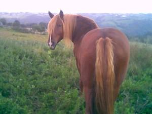 Les vers et vermifuges pour chevaux 10851974_p