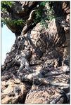 [WDW + Tourisme] Du 25 septembre au 11 octobre 2009 + WDW 2011 page 6 - Page 2 49517838_p