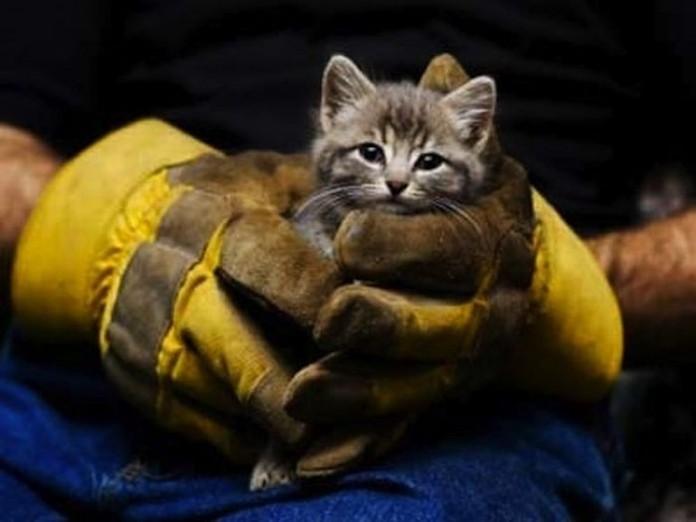 Чем для людей может обернуться спасение кота 144-696x522