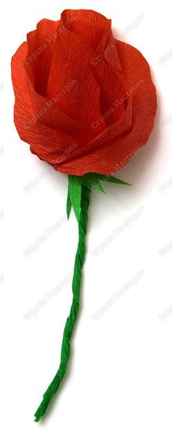 Миллион роз из гофрированной бумаги PICT3454