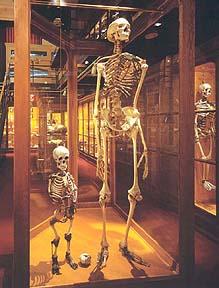 "7 Metre ""Giant Skeleton"" On Display In Switzerland? Giants"