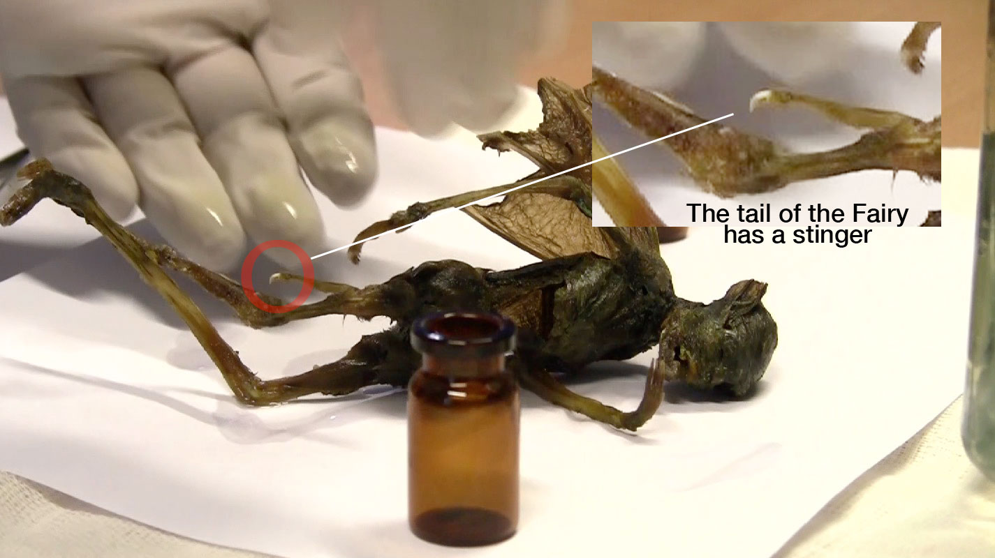 Strange winged creature in Mexico: Fairy ? Alien? or Locust  Mysterious-winged-creature-stinger