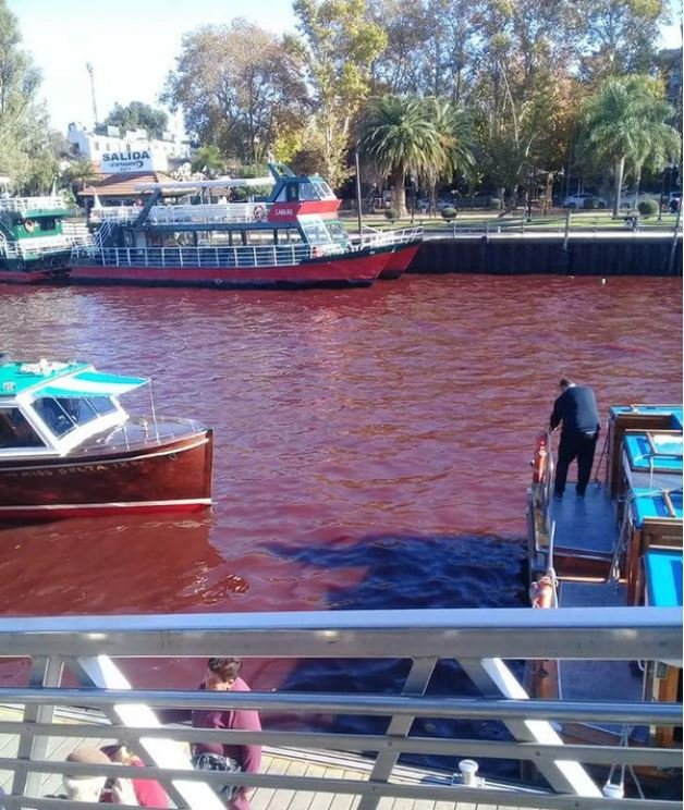 River turns mysteriously blood red overnight in Tigre near Buenos Aires, Argentina River-turns-blood-red-tigre-buenos-aires-argentina-1