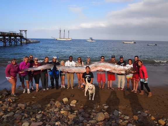 Гигантскою ремень-рыбу обнаружили на острове Каталина Remen_ryba