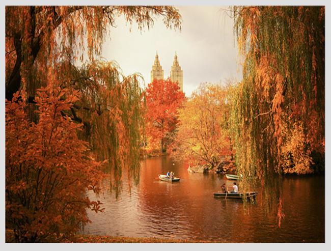 """Mê mẩn ngắm những mùa cây thay lá """"long lanh"""" nhất thế giới 13-1539422949-width650height493"""