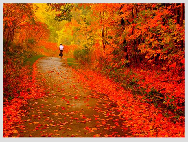 """Mê mẩn ngắm những mùa cây thay lá """"long lanh"""" nhất thế giới 17-1539422949-width650height493"""
