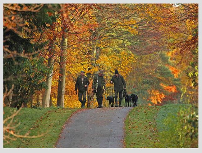 """Mê mẩn ngắm những mùa cây thay lá """"long lanh"""" nhất thế giới 18-1539422949-width650height493"""
