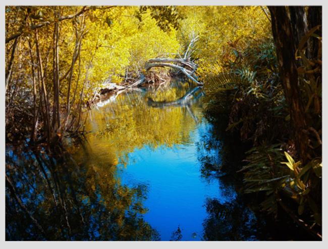 """Mê mẩn ngắm những mùa cây thay lá """"long lanh"""" nhất thế giới 19-1539422949-width650height493"""