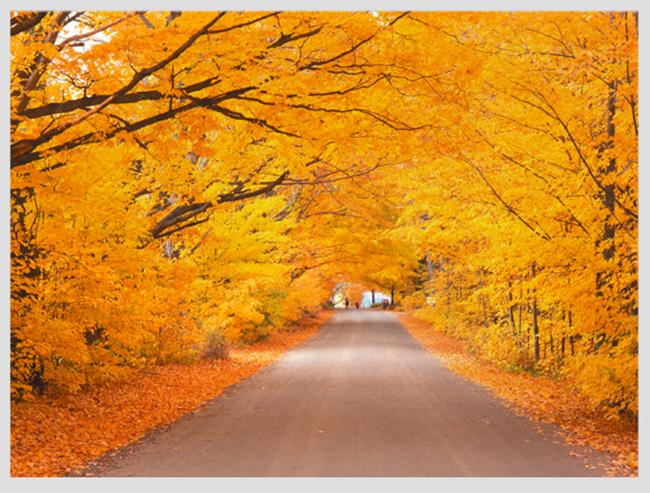 """Mê mẩn ngắm những mùa cây thay lá """"long lanh"""" nhất thế giới 20-1539422949-width650height493"""