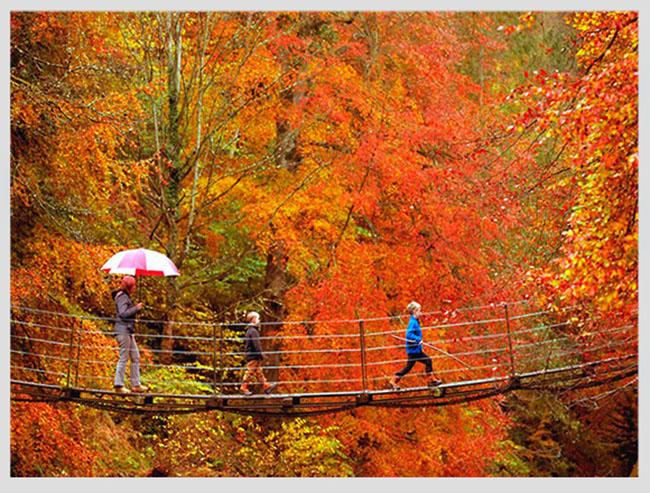 """Mê mẩn ngắm những mùa cây thay lá """"long lanh"""" nhất thế giới 21-1539422949-width650height493"""