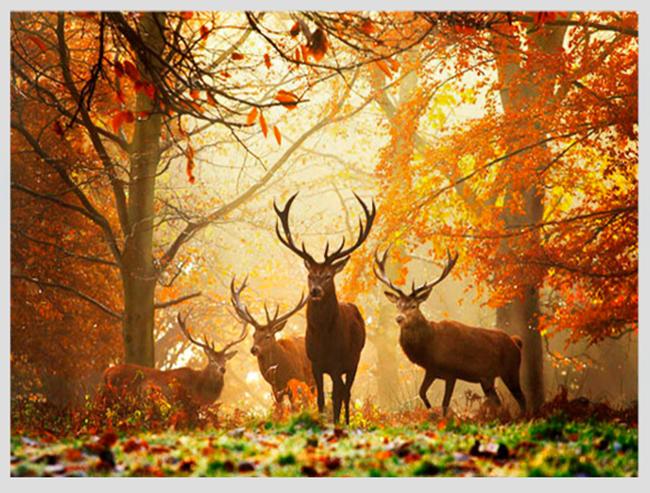 """Mê mẩn ngắm những mùa cây thay lá """"long lanh"""" nhất thế giới 22-1539422949-width650height493"""