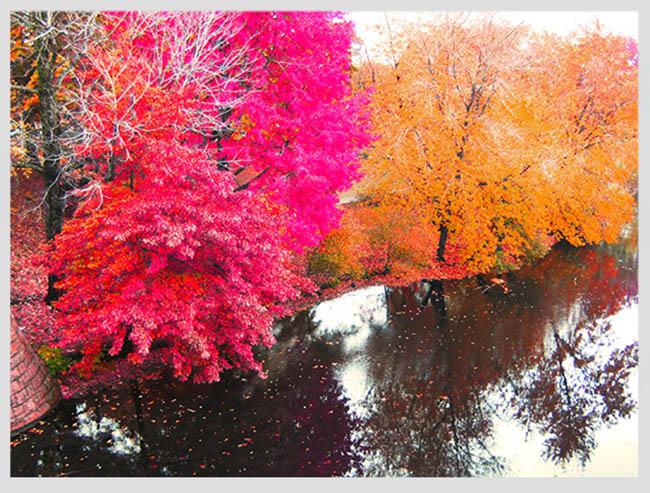 """Mê mẩn ngắm những mùa cây thay lá """"long lanh"""" nhất thế giới 3-1539422949-width650height493"""