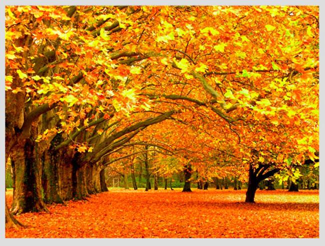 """Mê mẩn ngắm những mùa cây thay lá """"long lanh"""" nhất thế giới 6-1539422949-width650height493"""