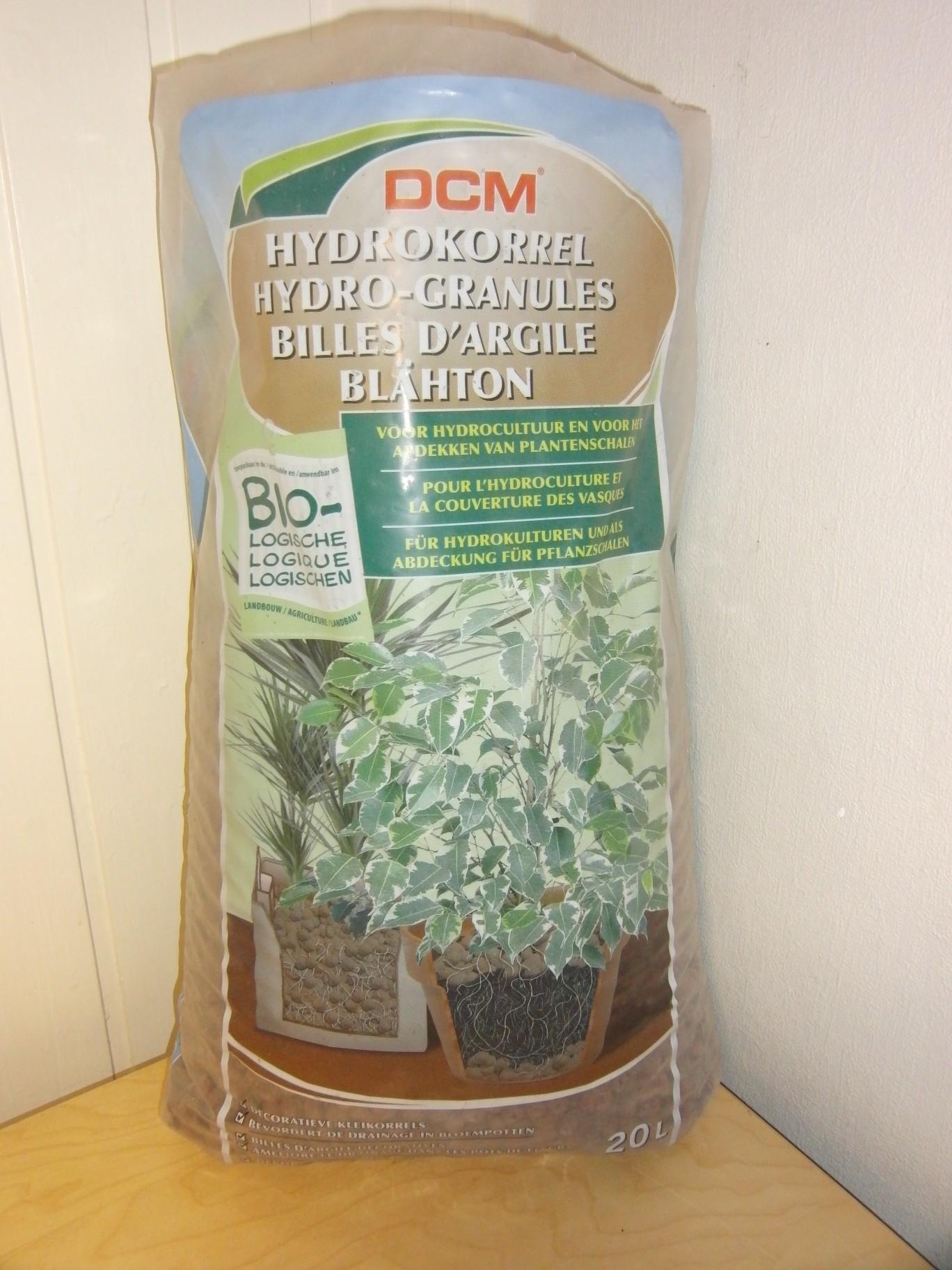 Dendrobium loddigesii Blaehton01