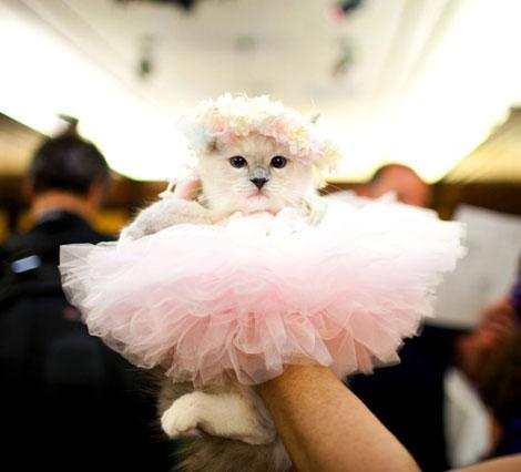 """""""An innocent kill"""" Ballerina-cat"""