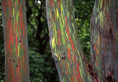 Un árbol con un tronco de lo mas peculiar ♥♥♥ Una pasada Bwy1290434535i