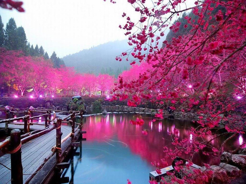 Japan Cherry-Blossom-Lake-Sakura-Japan