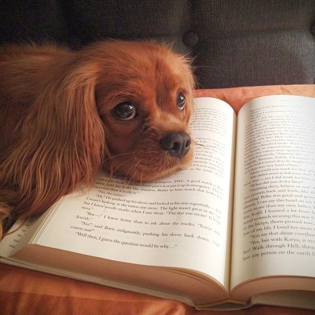 Es difícil leer si tienes mascotas Animales2