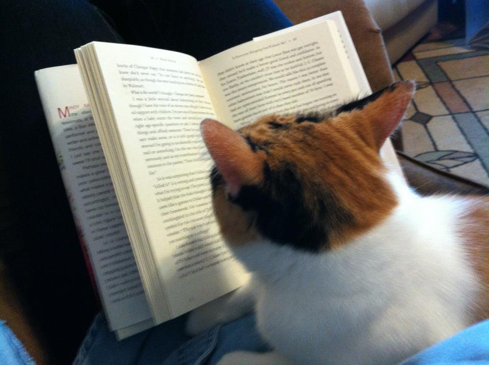 Es difícil leer si tienes mascotas Animales3