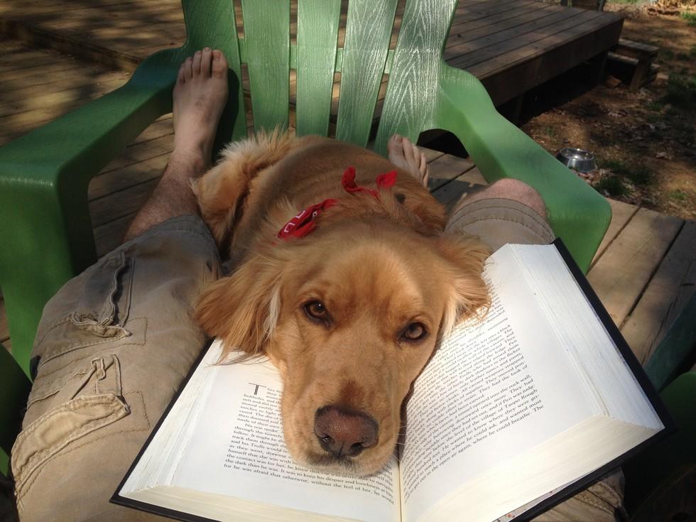 Es difícil leer si tienes mascotas Animales4