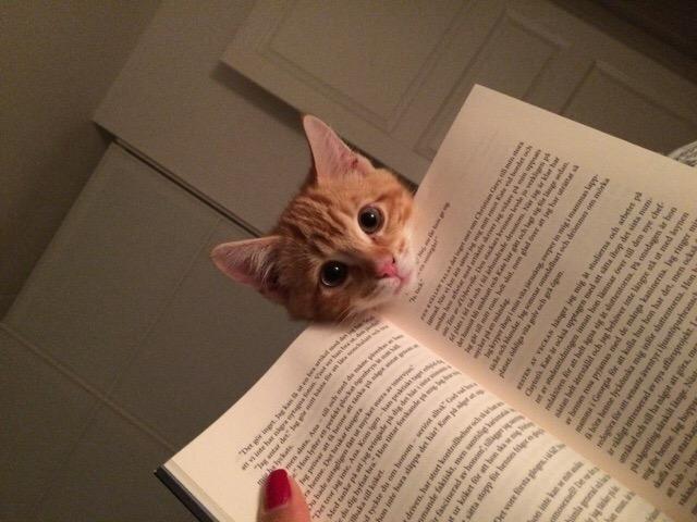 Es difícil leer si tienes mascotas Animales5