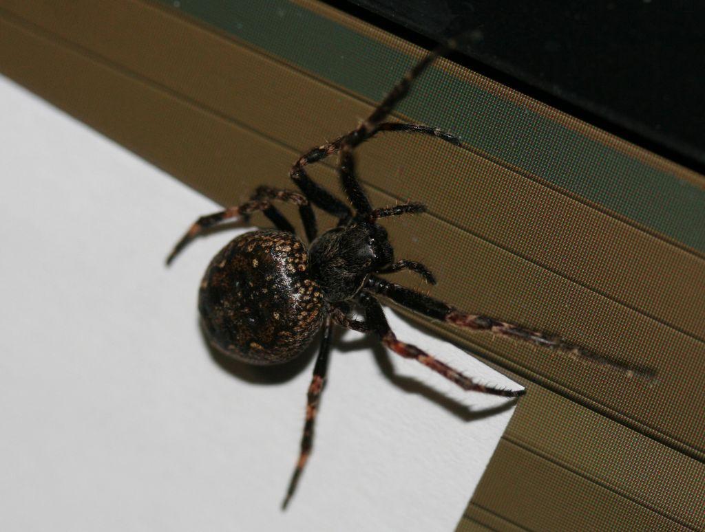 Araignée pas tres vive 44868682