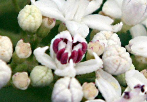 Fleur de Martine 6/12/2015 trouvée par Pitchoune 200759250